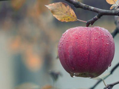 apple-1122537_1280